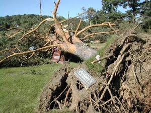 Cemetery Tornado